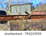 welder makes a fence in the... | Shutterstock . vector #792219559