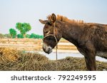 Poor An Innocent Brown Donkey...