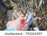 cat. pet. a girl is feeding a...   Shutterstock . vector #792261907