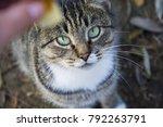 cat. pet. a girl is feeding a...   Shutterstock . vector #792263791