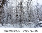 Small photo of Texture of snow covered branches in crazy forest. Winter forest with great trees. Cold day in snowy winter forest. Woods nature landscape in the winter day without food.