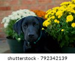 a close up portrait of a black... | Shutterstock . vector #792342139