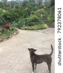 Small photo of A stray dog looking at a garden in Chiangmai