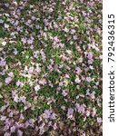 Small photo of Flowers and leaves on the grass,background abd texture.