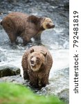 grizzly bear found on the west... | Shutterstock . vector #792481819