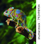Colorful Chameleon In Forest