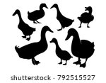 Set Of Duck Silhouette...