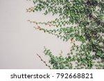 detail of green climbing plants ... | Shutterstock . vector #792668821