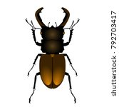 common stag beetle top view  on ...   Shutterstock .eps vector #792703417