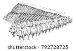vineyard landscape field in... | Shutterstock .eps vector #792728725