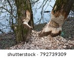 work of a beaver  beaver cut | Shutterstock . vector #792739309