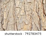 close up of tree texture | Shutterstock . vector #792783475
