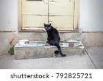 Stock photo the homeless animals beggars pets cats and veterinary medicine two adult homeless cat asking us 792825721