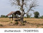 Small photo of old shaky hut under dry leafless tree in sunny rice paddy field after harvesting season