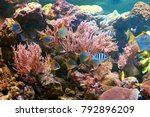 fishes and other fauna of coral ... | Shutterstock . vector #792896209