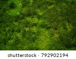 Natural Green Moss As A...