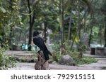 zoo in bangkok thailand  | Shutterstock . vector #792915151