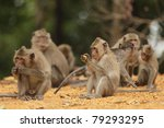 Macaque Family Eating Food In...