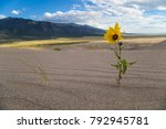 yellow flower growing out of...   Shutterstock . vector #792945781