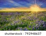 Texas Bluebonnet Field Bloomin...