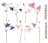 Set Dried Pressed Flowers A - Fine Art prints