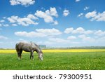 Grey Horse On Flower Meadow