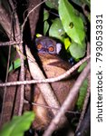 nosey be sportive lemur ... | Shutterstock . vector #793053331