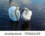 the loving courtship of swans... | Shutterstock . vector #793062109