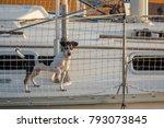 Cute Dog On Board Luxury Yacht...