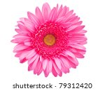 Gerber Flower Isolated On White ...
