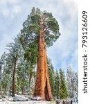 giant sequoia trees  ... | Shutterstock . vector #793126609