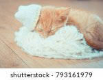 Stock photo kitten with a small hat on his head winter clothes for pets little red kitten kitty lies on a 793161979