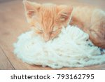 Stock photo little red kitten kitten lies on the fluffy carpet at home kitty lies on a ball of wool ginger 793162795