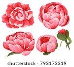 peony vector clip art set of 5... | Shutterstock .eps vector #793173319