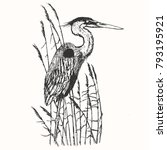 Heron In Vintage Engraving...