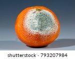penicillium citrinum growing on ... | Shutterstock . vector #793207984