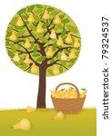 pear harvest   Shutterstock .eps vector #79324537
