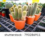 Small photo of Cactus in small brown pots placed on a black pantile floor. Natural garden background.