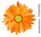 gerbera daisy isolated. vector... | Shutterstock .eps vector #793334551