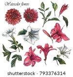 flowers set of watercolor... | Shutterstock . vector #793376314