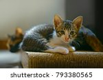 Stock photo  cute kittens everything about kittens a kitten also known as a kitty 793380565