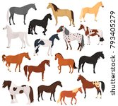 horse breeds color flat icons... | Shutterstock .eps vector #793405279