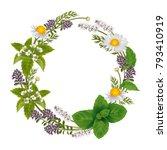 vector round ornament of herbs... | Shutterstock .eps vector #793410919