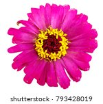 beautiful pink and yellow... | Shutterstock . vector #793428019