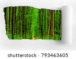 torn paper on the background of ... | Shutterstock . vector #793463605