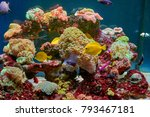 fishes and other fauna of coral ... | Shutterstock . vector #793467181