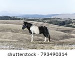 black horse isolated on pasture ... | Shutterstock . vector #793490314