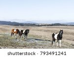 red and black horse on pasture... | Shutterstock . vector #793491241