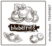 blueberry hand drawn graphics... | Shutterstock .eps vector #793495807