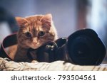 Stock photo domestic ginger cat and photo camera 793504561